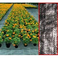 China PP woven geotextile 160g/sqm on sale