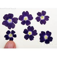 China Latest Class A Verbena Dried Flower Gifts , Hanging Dried Flowers For DIY Christmas Card on sale