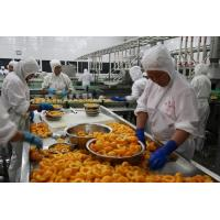 China High Efficiency Fruit Canning Equipment Canned Peach Production Line wholesale