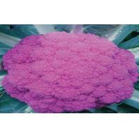 China Organic Purple Freezing Fresh Cauliflower Low Fat , 40 - 60 Mm on sale