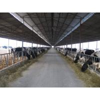 Pre-engineered Steel Framing Systems Breeding Cow / Horse With Roof Panels Manufactures
