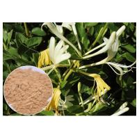 China Anti-bacterial Chlorogenic acid 5% Honeysuckle Flower Extract powder wholesale