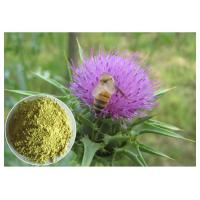 China Milk Thistle Plant Extract Powder Silymarin 60% - 80% Preventing Liver Disorder wholesale