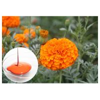 China CAS 127 40 2 Lutein Marigold Flower Extract , Marigold Extract Powder For Tablets wholesale