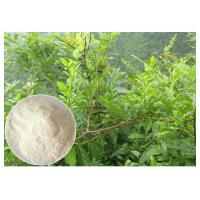China Dihydromyricetin ease alcohol syptoms Ampelopsis grossedentata Extract powder wholesale