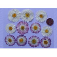 China Christmas Gifts Large Dried Flowers , Dried Daisy Flowers For Birthday Party on sale
