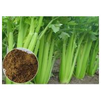 China 80 Mesh Celery Extract Powder , Celery Seed Apium Graveolens Extract For Arthritis wholesale
