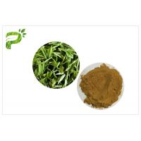 China Green Tea Polyphenols Plant Extract Powder 95% For Dietary Supplement Weight Loss wholesale
