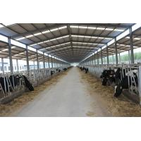 China Automation And Sanitary Pre-made Steel Structural Cowshed Framing Systems wholesale