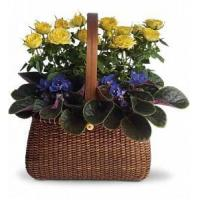 China Garden To Go Basket [T92-2A] on sale