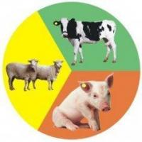 Buy cheap Animal Rfid Tags Mango,YX from wholesalers