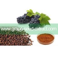 China 2016 Top Selling Grape Seed Extract 95% Proanthocyanidins wholesale