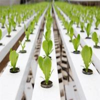 China Agricultural Greenhouse Flat Hydroponics commercial hydroponics wholesale